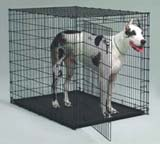 Crate for Great Danes thumbnail image.