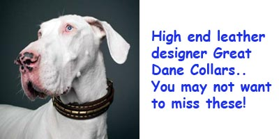 Designer leather Great Dane collar.