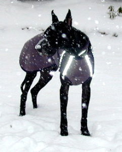Alpenhitze™ winter dog coat for Great Danes and large breeds.