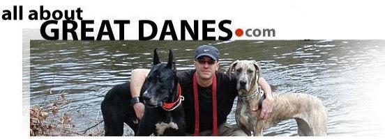 Great Dane Rescue Directory