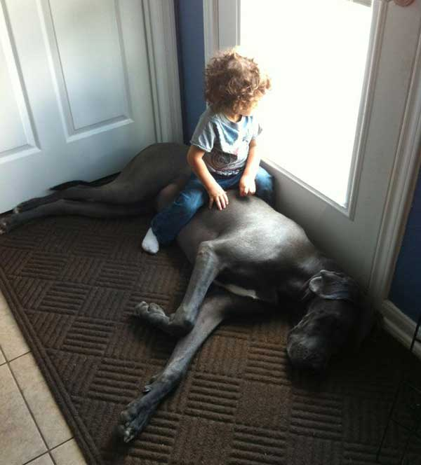 Great Dane and toddler.