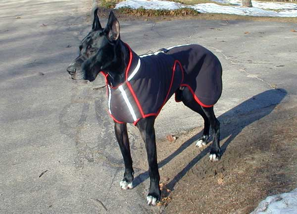 Great Dane wearing black Polartec custom dog coat.