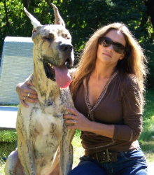 Handsome Brindle Great Dane Apollo posing with his Mom.