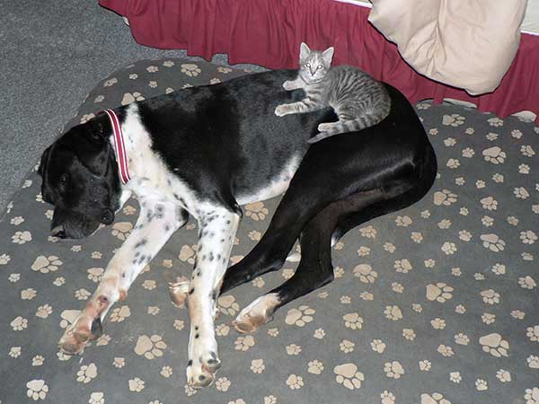 Great Danes and small pets.