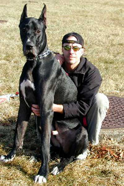 Site Founder Jeff Zitzkat with his Great Dane Bruiser
