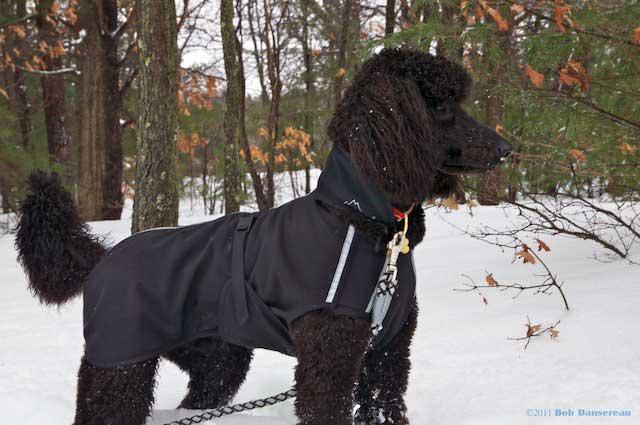 Alpenhitze™ Custom Dog Coats
