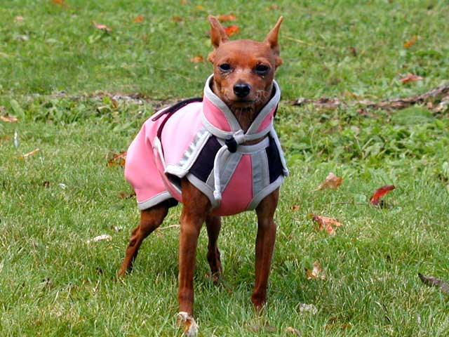Custom sewn xs small dog coat pink Polartec with silver trim.